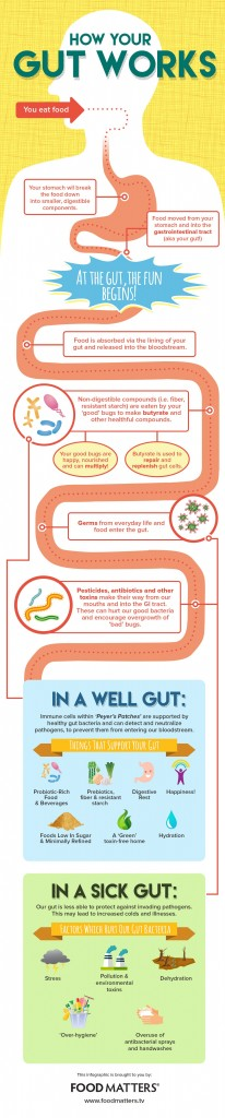 gut-infographic